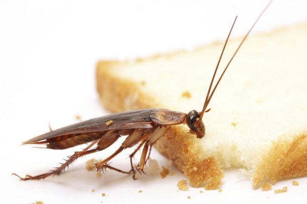 kakkerlakken bestrijden in restaurants in Amsterdam
