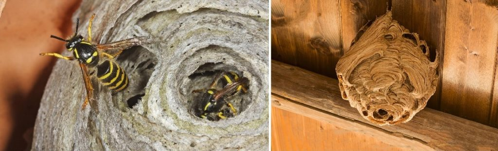 wespennest verwijderen in Wormerveer, Zaanstreek-Waterland